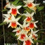Kris Orchid Nursery