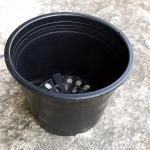 กระถางพลาสติกดำ ขนาด 5.5 นิ้ว จำนวน 10ใบ