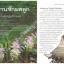หนังสือ บันทึกของแผ่นดิน ๗ สมุนไพร ดูแล แม่หญิง อภัยภูเบศร thumbnail 3