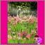 เล่ห์ฝนกลหมอก ชุด หัวใจเดินทาง กรมาศ ที่รัก ในเครือ dbooksgroup thumbnail 1