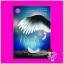 นางฟ้าของนักฆ่า ภัคร์ภัสสร(Chineserose) ทำมือ thumbnail 1