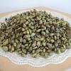 เมล็ดพันธุ์มอนสเตอร่า ไจแอนท์ (ราชินีไม้ใบ)