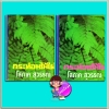กระท่อมไม้ไผ่(ปกแข็ง)เล่ม1-2(มือสอง) โสภาค สุวรรณ คลังวิทยา
