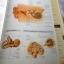 กายวิภาคศาสตร์ Essential atlas of anatomy 4 สีทั้งเล่ม thumbnail 5